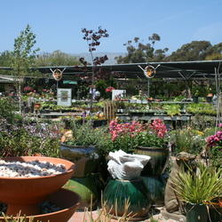 More Nursery. Thumbnail By Calif_Sue