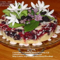 Hosta Berry Cake