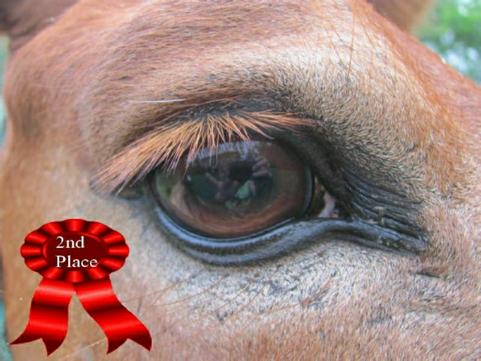 owners reflection in the eye of Charlie the mule