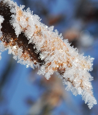 Frost on apple tree leaf, magnified