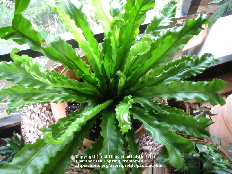 Indoor tropical plants pictures picture images frompo - House plant names with pictures ...