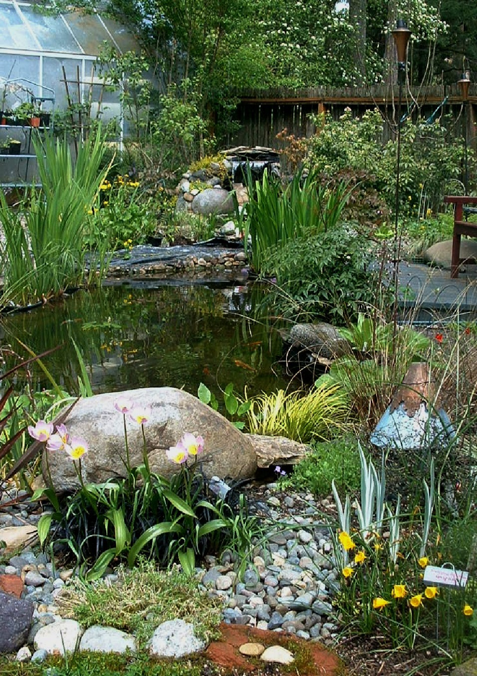 Koi fish and ponding cubit questions about building a for Garden pond questions