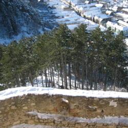 2010-03-23/adinamiti/a21078