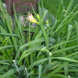 2010-03-24/firefly/f2e1b5