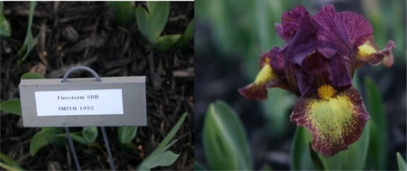 http://cubits.org/pics/2010-04-01/avmoran/20397e.jpg