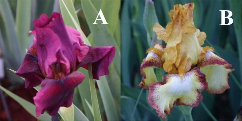 http://cubits.org/pics/2010-04-01/avmoran/67e08c.jpg