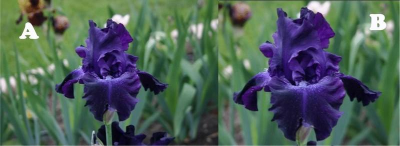 http://cubits.org/pics/2010-04-01/avmoran/f1af1d.jpg