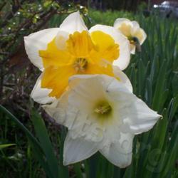 2010-04-12/Sharran/3ddc55