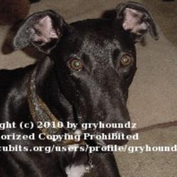 2010-04-18/gryhoundz/922023