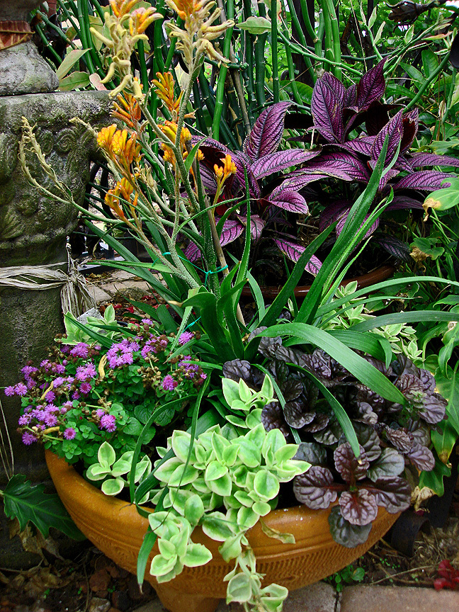 Container Gardening With Katg Cubit The Flexibility And