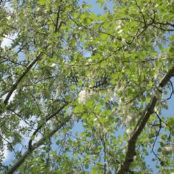 2010-05-07/adinamiti/47cfa7