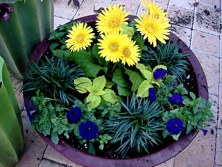 Container Gardening With Katg Cubit Creating Unique