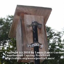 2010-06-15/Lance/ba6e38