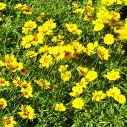 2010-09-26/SunnyBorders/ea0ea4