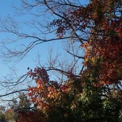 2010-10-31/Sharran/1e3cfc