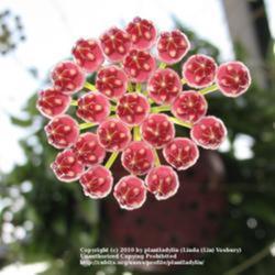 2010-11-07/threegardeners/c76029