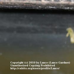 2010-11-10/Lance/09db90