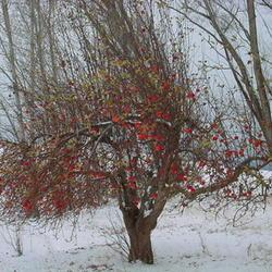 2010-12-03/Sharran/3595a3