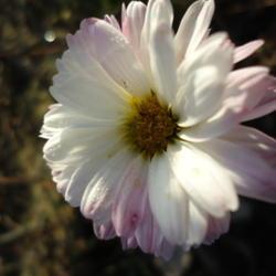 2010-12-09/adinamiti/bf55b9