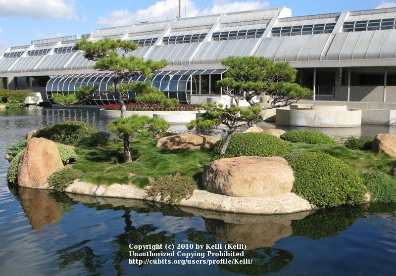Welcome To Kellifornia Cubit Trips Excursions Forum Japanese Garden Van Nuys California
