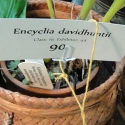 2011-03-06/lakesidecallas/504ada