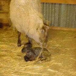 2011-03-27/Patti1957/9377fe