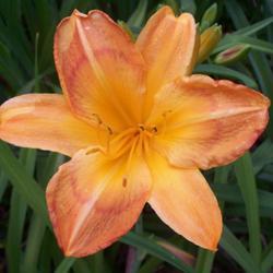 2011-06-12/Sharran/340770