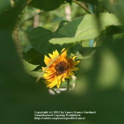 2011-08-02/Lance/c5f885