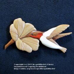 2011-11-19/goldfinch4/69b233