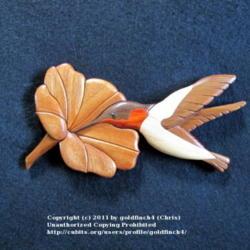 2011-11-19/goldfinch4/da4a8c
