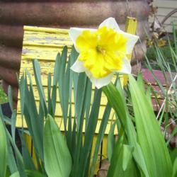 2012-03-18/Sharon/82d3ec