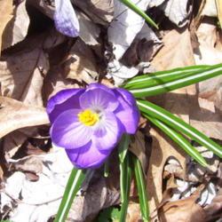 2012-03-18/Sharon/89259a