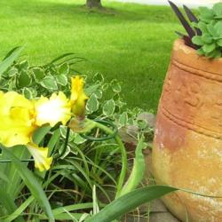 2012-04-22/Sharon/380255