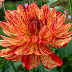 Thumb of 2012-05-25/teddahlia/d321c9