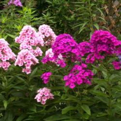 2012-08-19/Sharon/bf7046