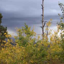 Thumb of 2012-10-16/quietyard/e2ae3b
