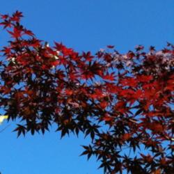 2012-10-20/Sharon/e20772