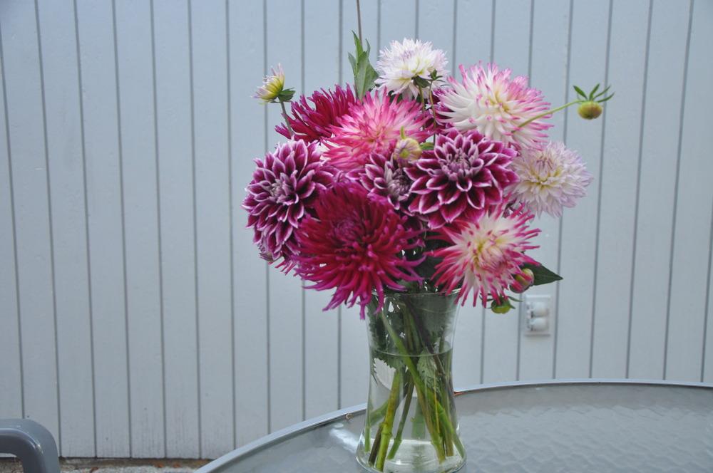 Букет из георгин к 1 сентября, хризантемы букет