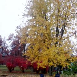 2013-10-14/Sharon/8a0ce7