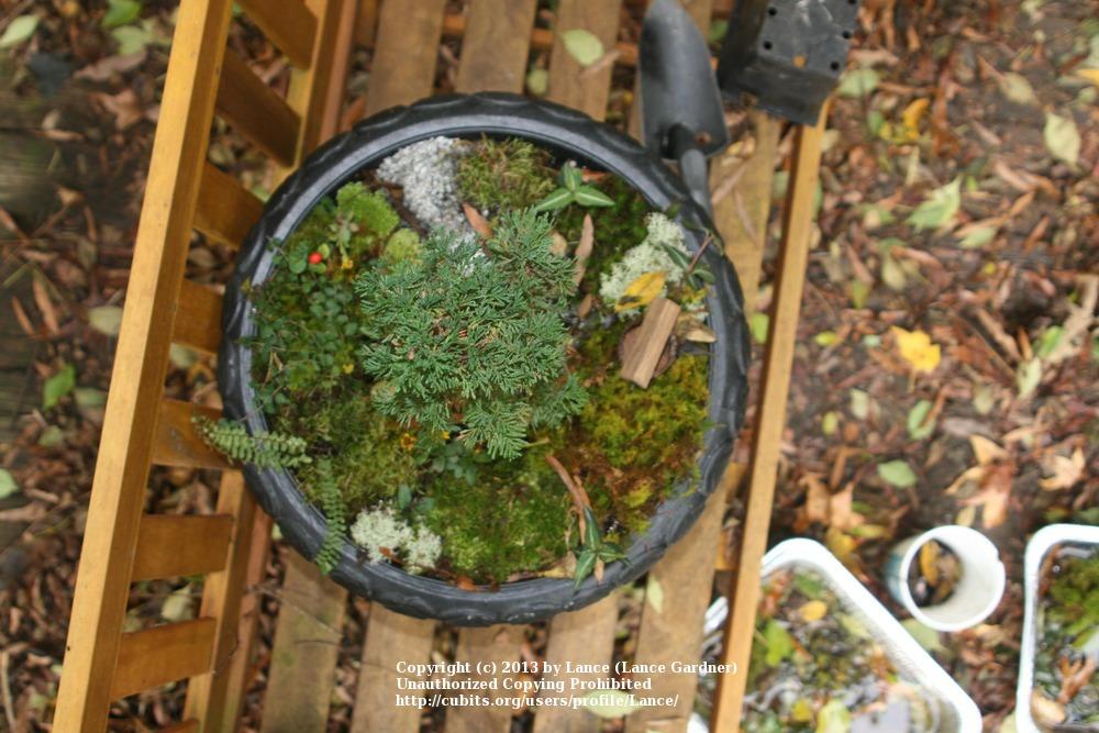 Gnome In Garden: Wireless & Unplugged Cubit: Gnome Garden
