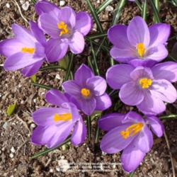 2014-04-03/Sharon/52eb1b