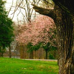2014-04-04/Sharon/395bef