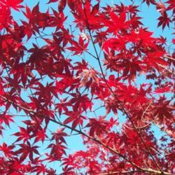 2014-10-22/Sharon/1457f6