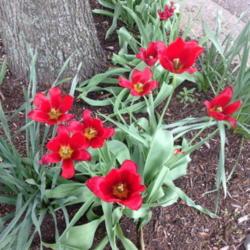 2015-04-25/Sharon/547b33
