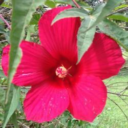2015-08-27/Sharon/da547d