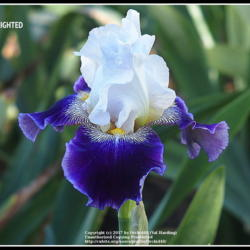 Thumb of 2017-11-23/Orchid40/0065f3