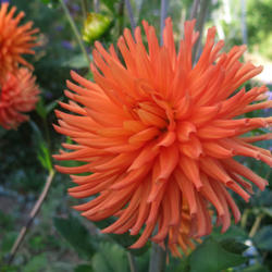Thumb of 2020-08-22/teddahlia/ad7085